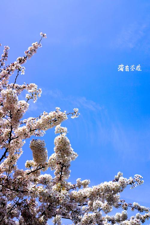 DSC05988のコピー.jpg