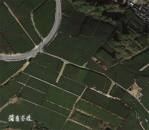 茶畑のコピー.jpg